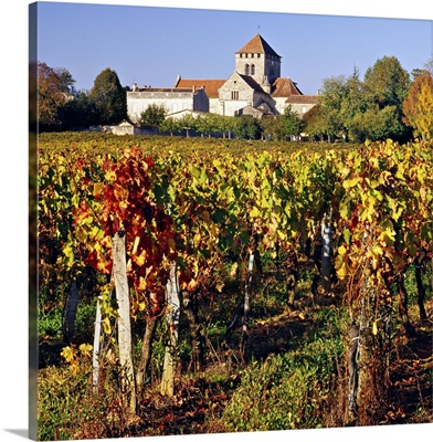 France, Aquitaine, Montagne, Gironde, Bordeaux region