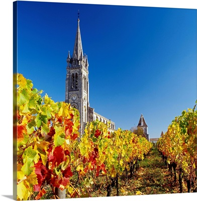 France, Aquitaine, Pomerol, Gironde, Bordeaux region, Vineyard near the village