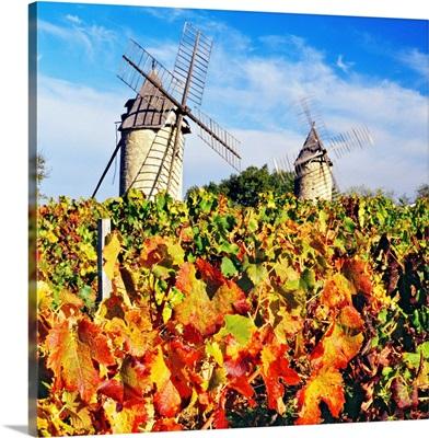 France, Aquitaine, Saint-Emilion, Gironde, Bordeaux region, Chateau Calon vineyard