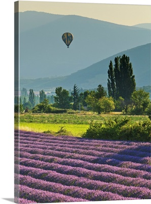 France, Banon, Hot Air Balloon Flying At Sunset Over Lavender Fields Near Valensole