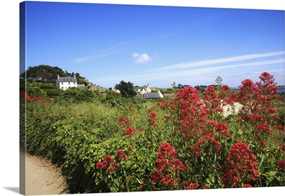 France, Brittany, Roscoff, The Batz island