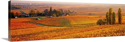 France, Burgundy, Aloxe Corton, Vineyards