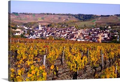 France, Burgundy, Irancy, Yonne, Vineyards