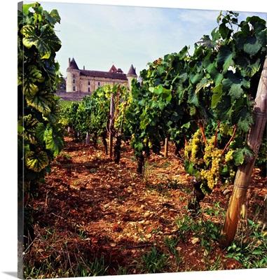 France, Burgundy, Rully, Saone-et-Loire, Rully castle and vineyard
