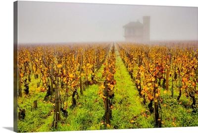 France, Burgundy, Vougeot, Chateau Clos De Vougeot Vineyard