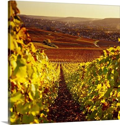 France, Champagne-Ardenne, epernay, Champagne, Marne, Vineyards