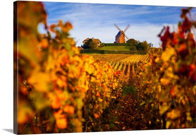 France, Champagne-Ardenne, Verzenay, Vineyards And Windmill In Autumn
