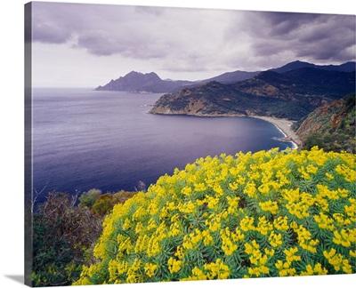 France, Corsica, Les Calanques (sea cliffs) and Cape Girolata near Porto village
