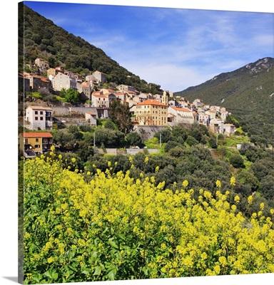 France, Corsica, Olmeto, Mediterranean area, Corse-du-Sud
