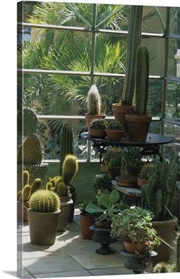 France, Cote d'Azur, Saint Tropez, Hotel Villa Marie, cactus in the conservatory