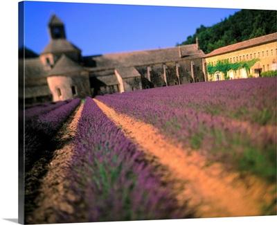 France, Provence, Abbaye Notre-Dame de Senanque, lavender field
