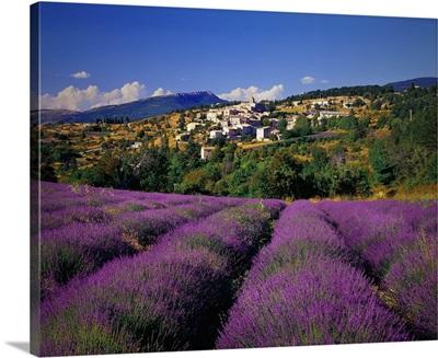France, Provence-Alpes-Cote d'Azur, Aurel, Lavender fields