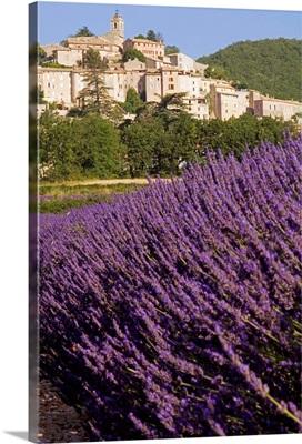 France, Provence-Alpes-Cote d'Azur, Banon, Lavender field