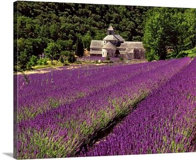 France, Provence-Alpes-Cote d'Azur, Gordes, Senanque Abbey