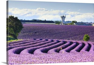 France, Provence-Alpes-Cote d'Azur, Provence, Valensole, Lavender field near Valensole