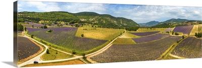 France, Provence-Alpes-Cote d'Azur, Provence, Vaucluse, Lavender fields near Aurel