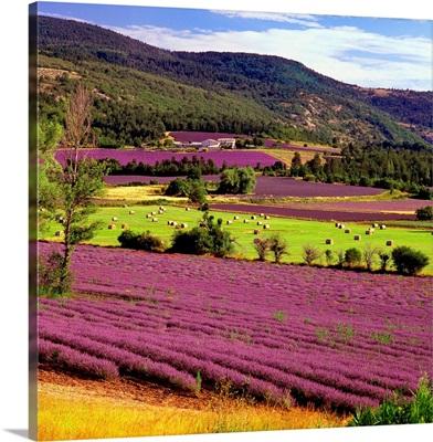 France, Provence-Alpes-Cote d'Azur, Sault