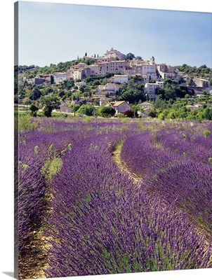 France, Provence-Alpes-Cote d'Azur, Simiane-la-Rotonde, Lavender field