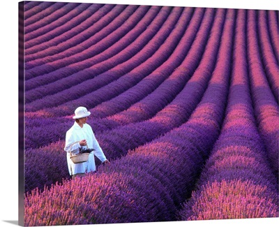 France, Provence, Valensole, girl in lavender field