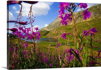 France, Rhone-Alpes, Isere, flowers near the Lac Besson