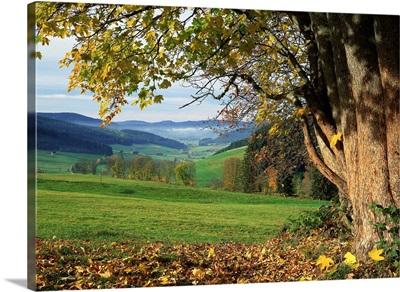 Germany Baden-Wurttemberg, Black Forest, Landscape near St Peter village