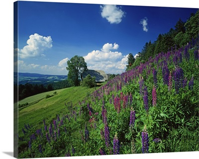 Germany, Baden-Wurttenberg, Black Forest, Landscape near St Peter village