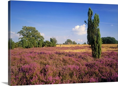Germany, Luneburger Heide region, typical landscape near Celle town