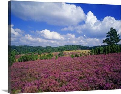 Germany, Niedersachsen, Countryside near Celle town