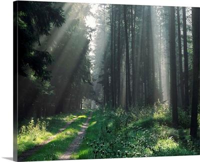 Germany, Niedersachsen, Luneburger Heide region, typical landscape near Celle town