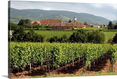 Germany Rhineland-Palatinate, Edenkoben, vineyards