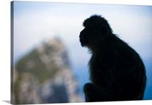 Gibraltar, Mediterranean area, The Rock, Pillar of Hercules or Calpe, Barbary Macaque