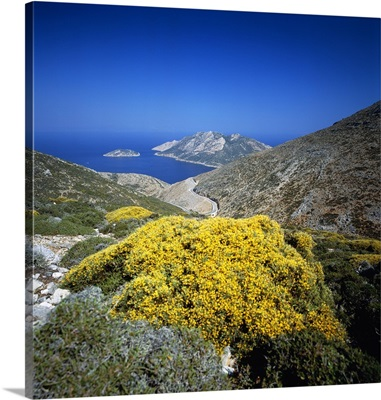 Greece, Brooms in bloom in the mountains, view towards Nikouria island