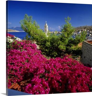 Greece, Dodecanese, Chalki, Emporio harbor, bougainvillea