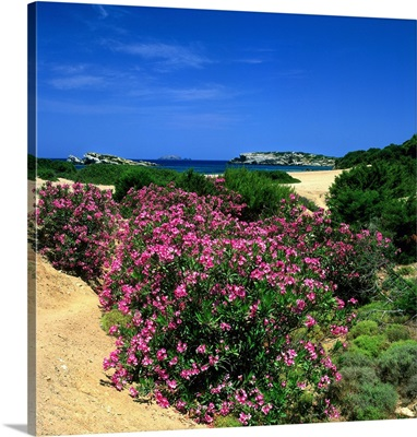 Greece, Sporades, Skiros, Oleander and beach