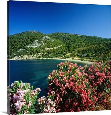 Greece, Sporades, Skiros, Pefkos Beach