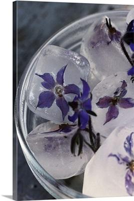 Ice with Borage flowers