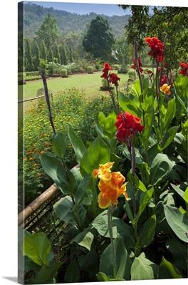 India, Goa, Bondla Wildlife Sanctuary, Flowering in the botanical garden