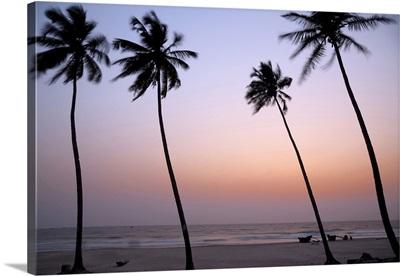 India, Goa, Palms along the Colva beach at sunset