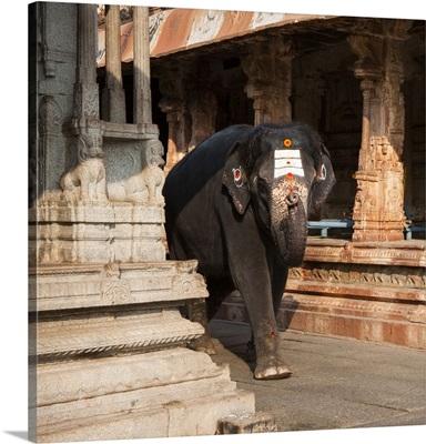 India, Karnataka, Hampi, Lakshmi the Temple Elephant, Virupaksha Temple