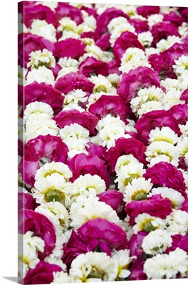 India, Rajasthan, Jodhpur, cut flowers for temple puja offering