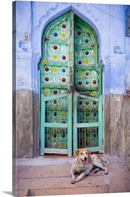 India, Rajasthan, Jodhpur, Dog resting in a colorful doorway