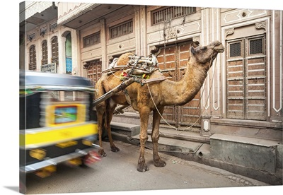 India, Rajasthan, Nawalgarh, Narrow lane with camel and rickshaw
