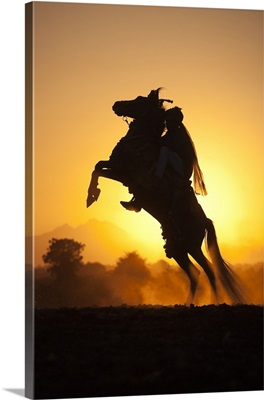 India, Rajasthan, rider on a rearing Kathiawari horse backlit in the sunset