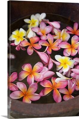 Indonesia, Bali, Jimbaran, flowers floating on water