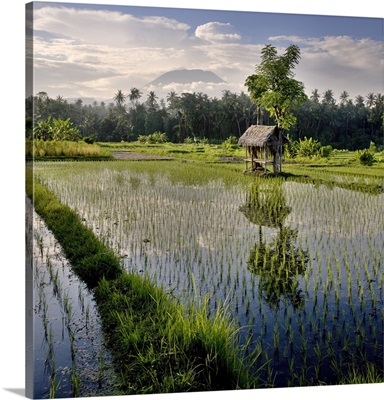 Indonesia, Klungkung, A rice field and shelter with Mount Agung in the background