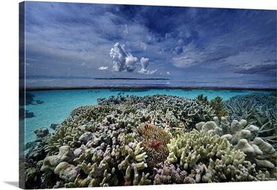 Indonesia, Sulawesi Island, Coral reef