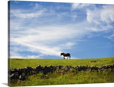 Ireland, Aran, Inisheer, horse walking on hilltop in profile