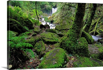 Ireland, Kerry, Killarney, View of the Torc Waterfall
