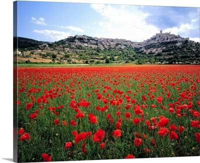 Italy, Abruzzo, Tirino valley, Capestrano, poppies