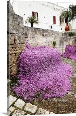 Italy, Apulia, Itria Valley, Fasano, The garden of the Masseria Torre Coccaro